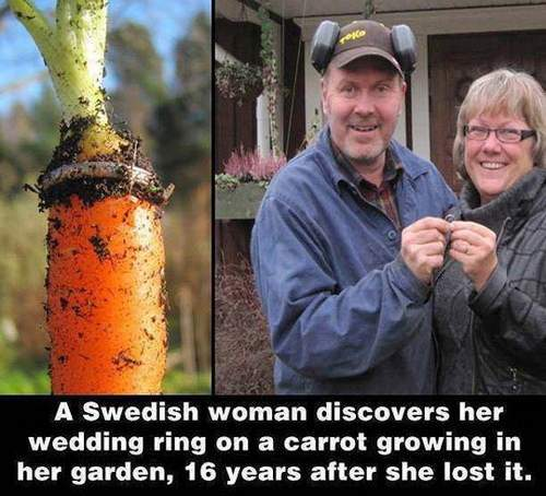 A Swedish woman discovers her wedding ring in a carrot growing in her garden