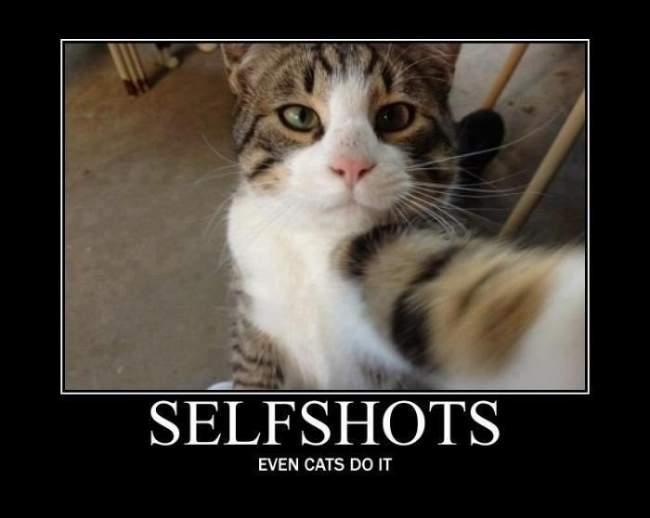Cat - Selfshot