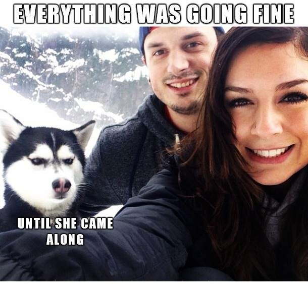 Dog - Everything was going fine...