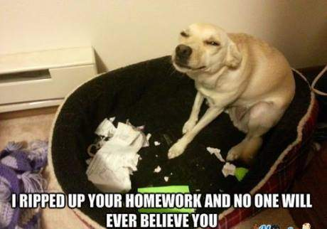 Dog - I ripped up your homework