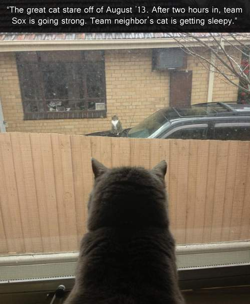 The grate cat stare off of August'13