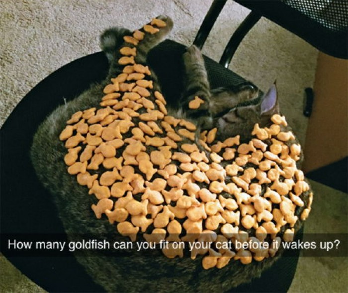 How many goldfish can you fit on your cat...