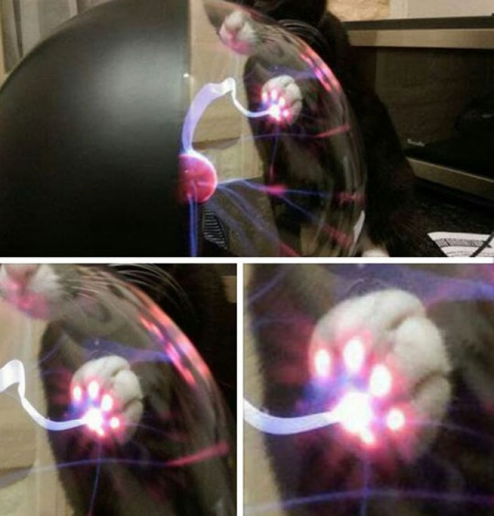 What Happens When A Cat Touches A Plasma Ball