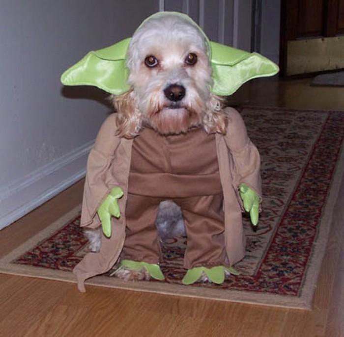 Yodawg!