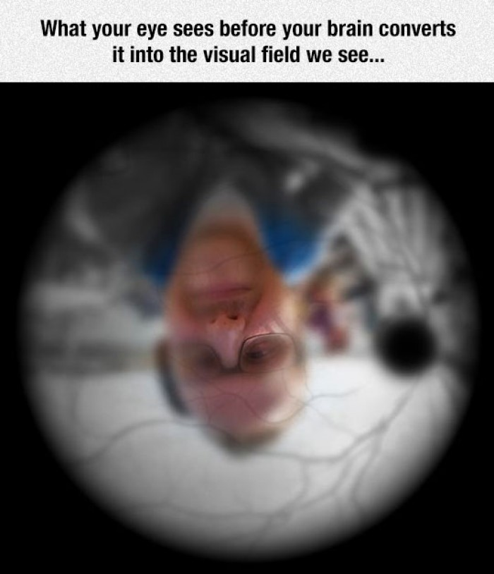 What your eye sees before your brain converts it into the visual field we see..