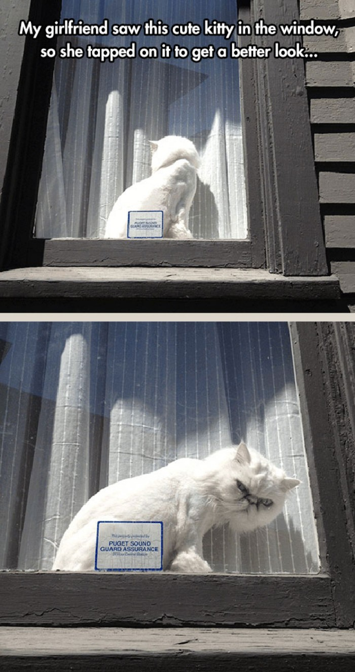 My girlfriend saw this cute kitty in the window...