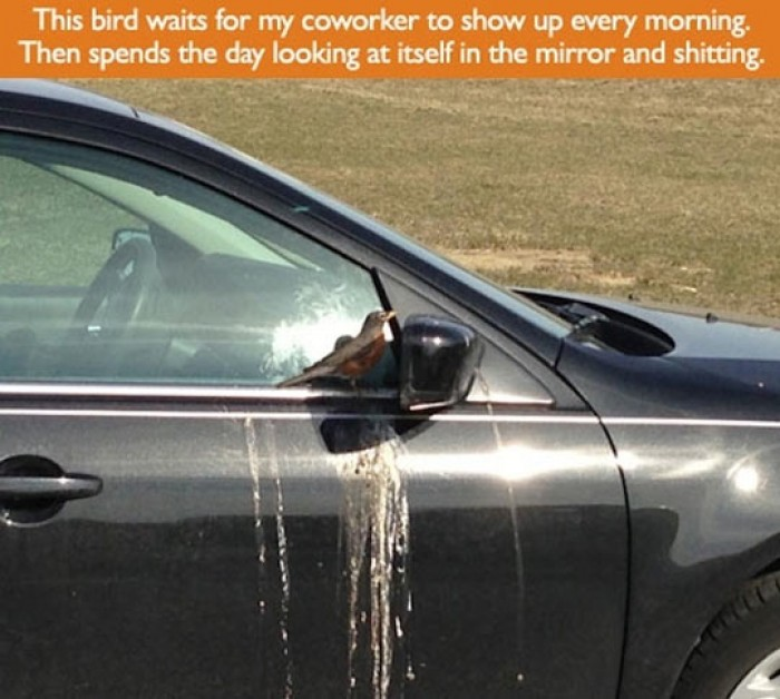 This Bird Is A Freaking Genius