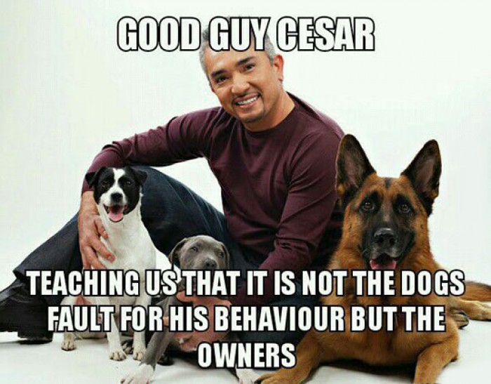 Good Guy Cesar