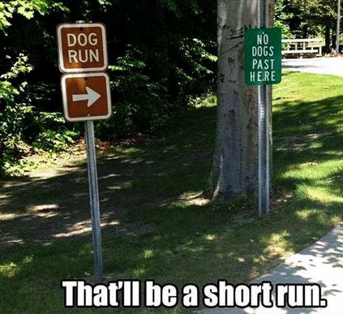 Shortest run lane for dogs
