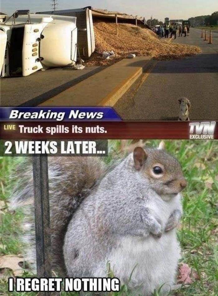 Breaking news ,Truck spills its nuts...