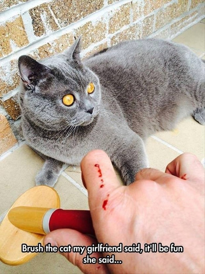 Brush the cat my girlfriend said