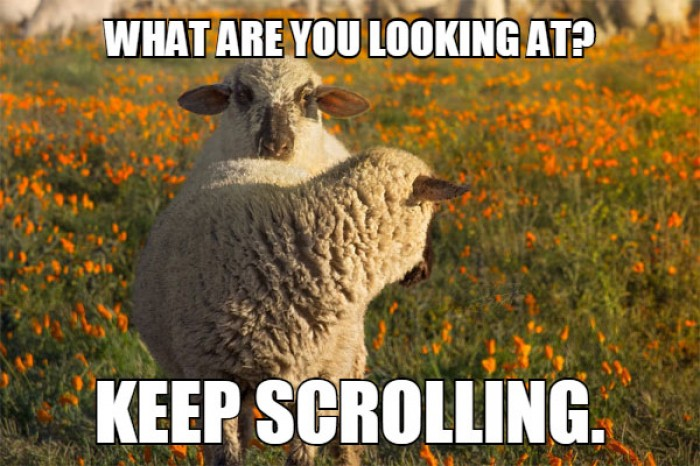 Sheep - What are you looking at? Keep scrolling.