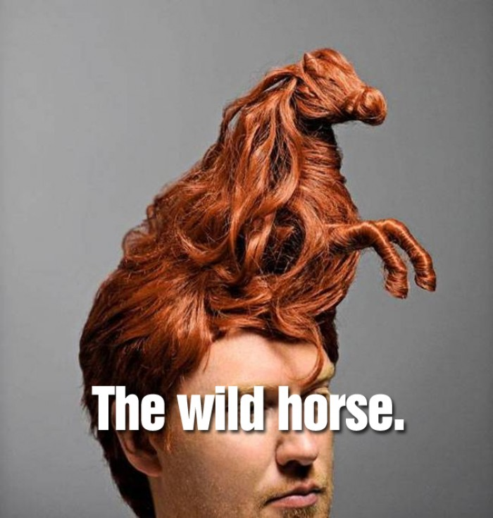 Hairstyles - The wild horse.