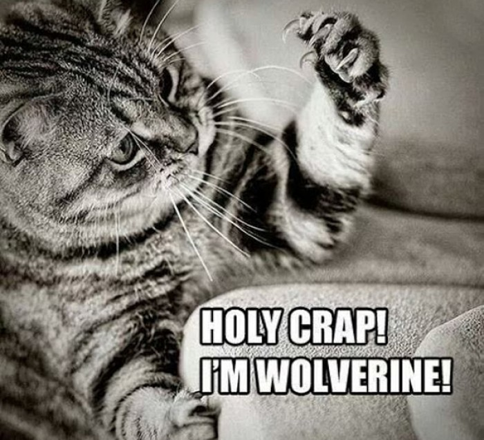 Holy crap! I'm Wolverine!