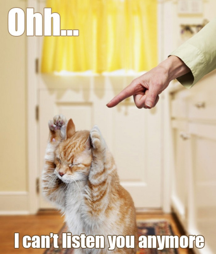 """Cat thinking """"I can't listen you anymore!"""""""