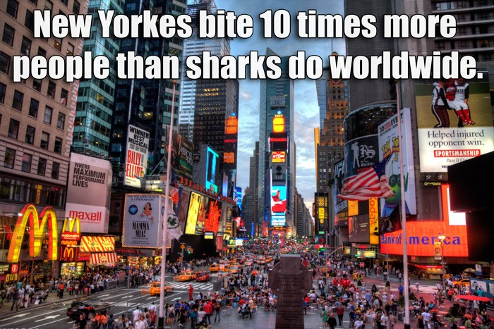 New Yorkers bite 10 times more people...