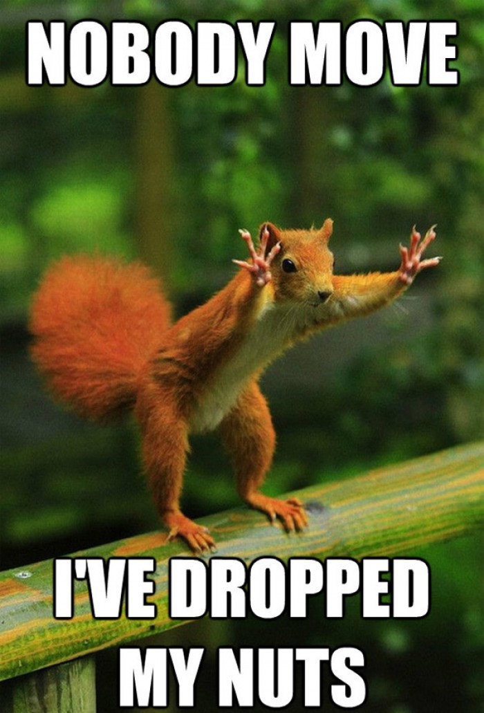 Nobody move i've dropped my nuts!
