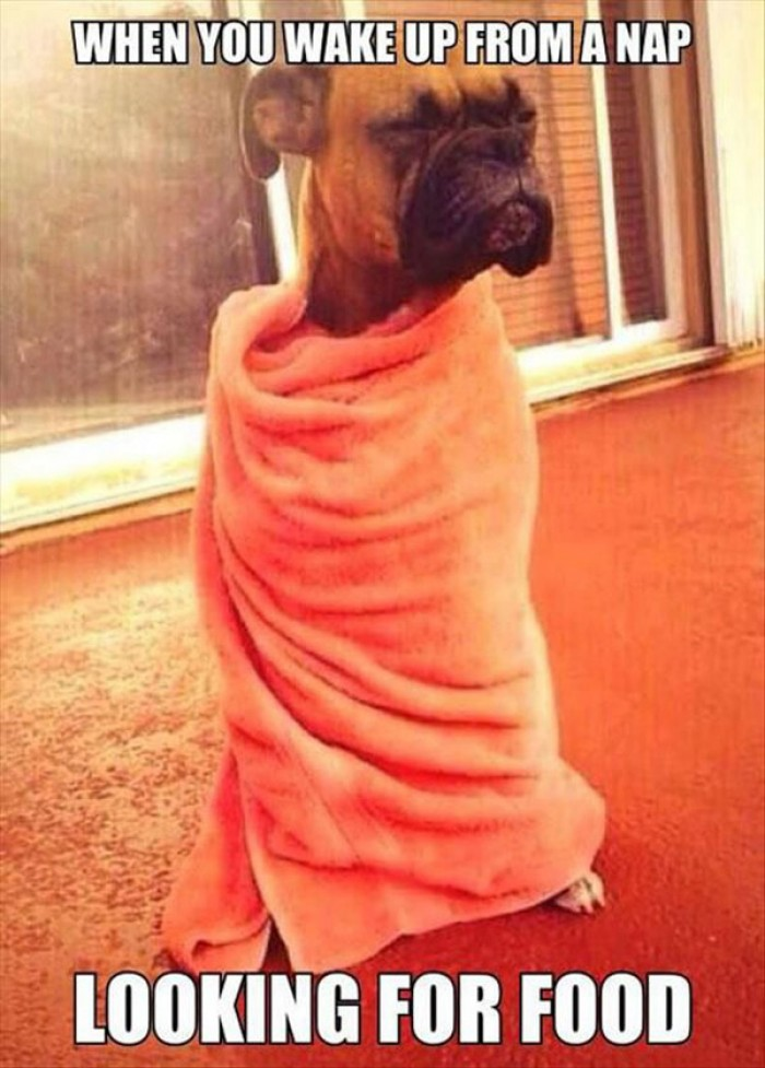 When you wake up from nap looking for food