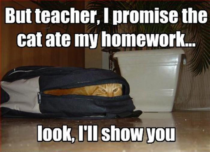 But teacher, I prommise the cat ate my homework!