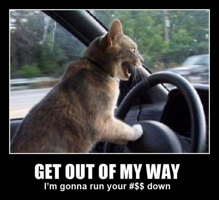 Cat driving a car and yelling