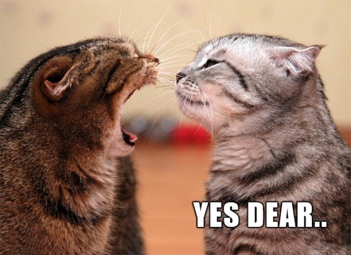 Cat yelling at her honey