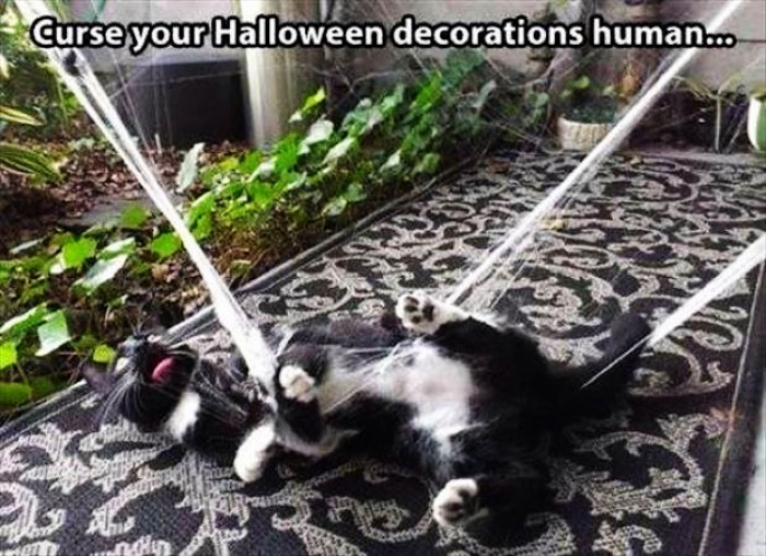 Curse your halloween decorations human