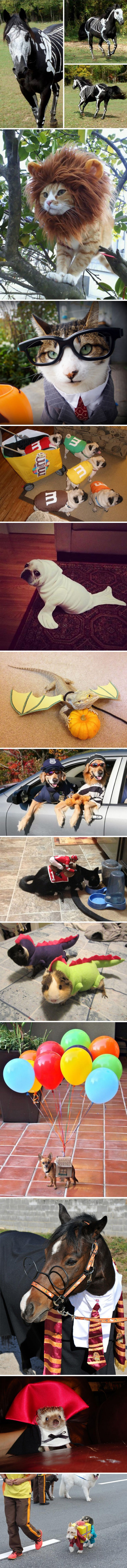Don't forget your pets on Halloween