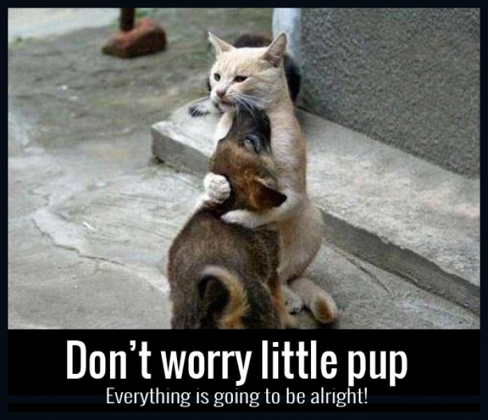 Don't Worry Little Pup