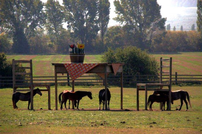 Apparently this farm owner was denied a council permit to build a horse shelter.