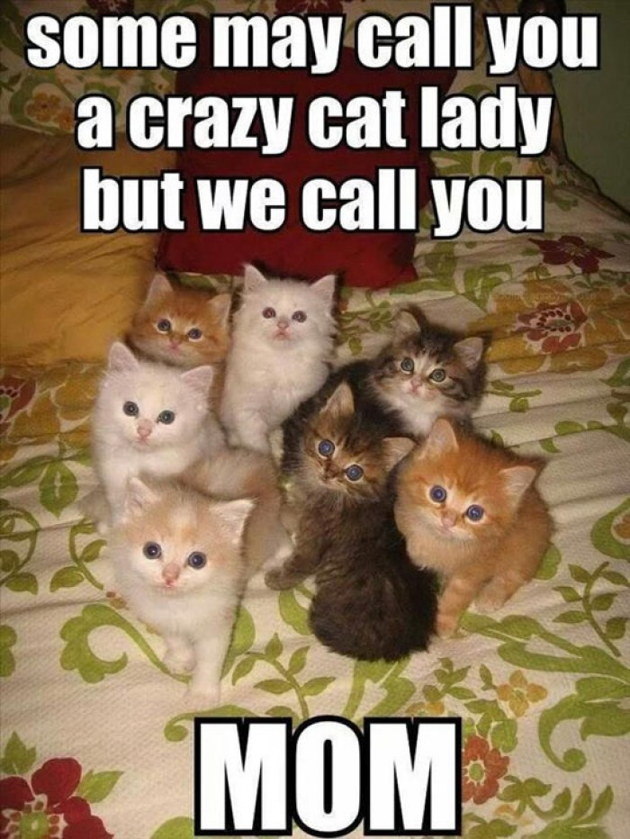 Some May Call you a Crazy Cat Lady...