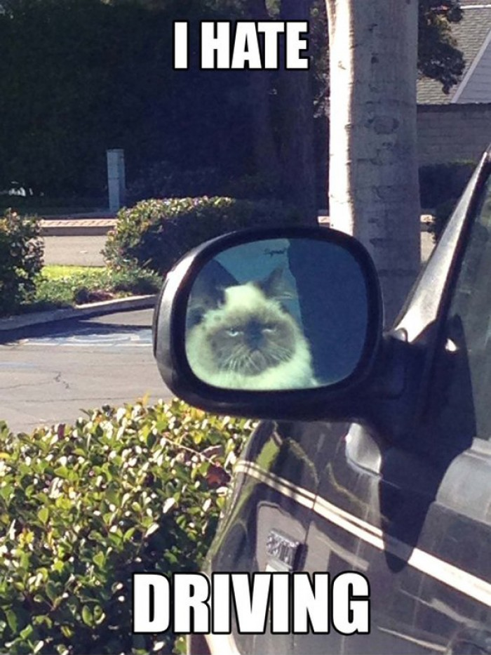 Grumpy Cat Hates Driving