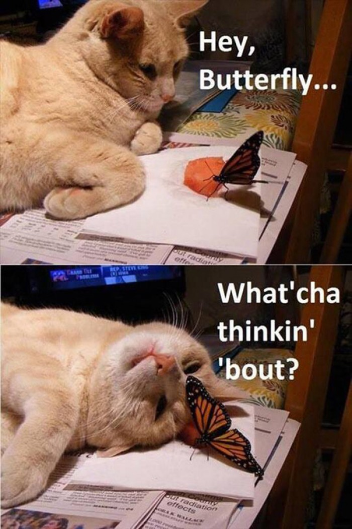 Cute cat with a butterfly.