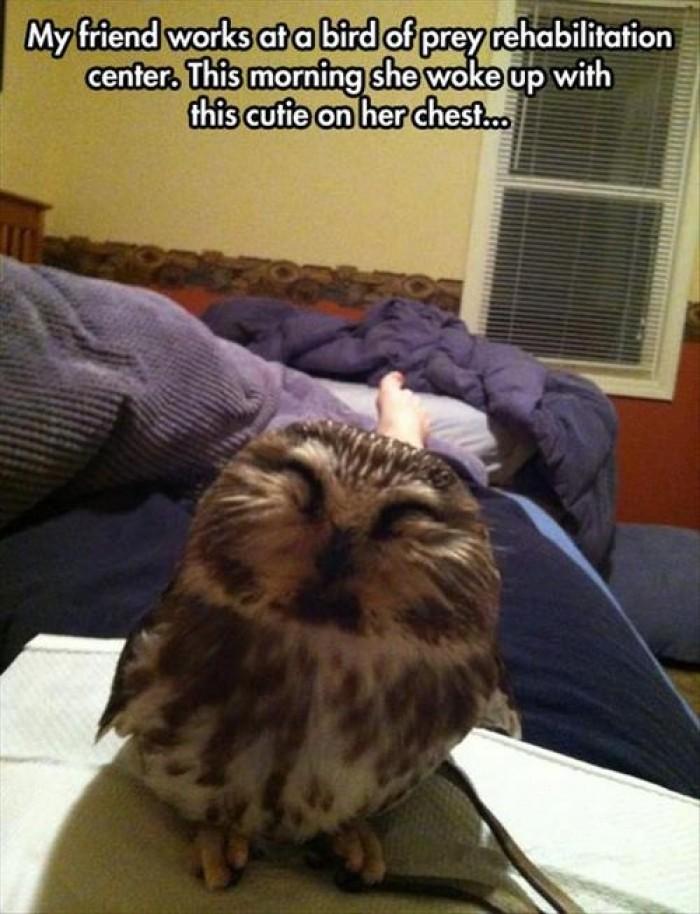 My friend works at bird of prey rehabilitation center..