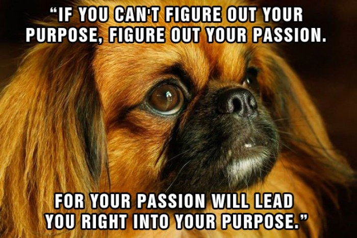 Purpose and Passion