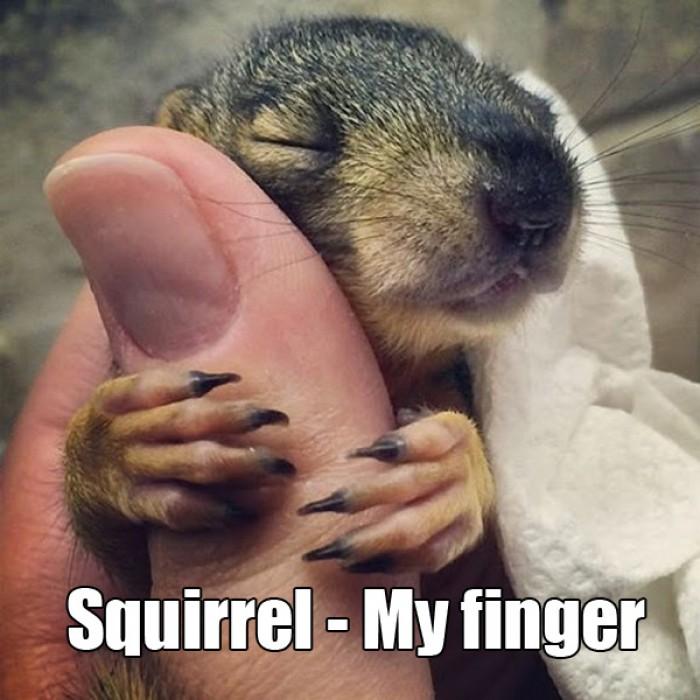 Squirrel - My finger