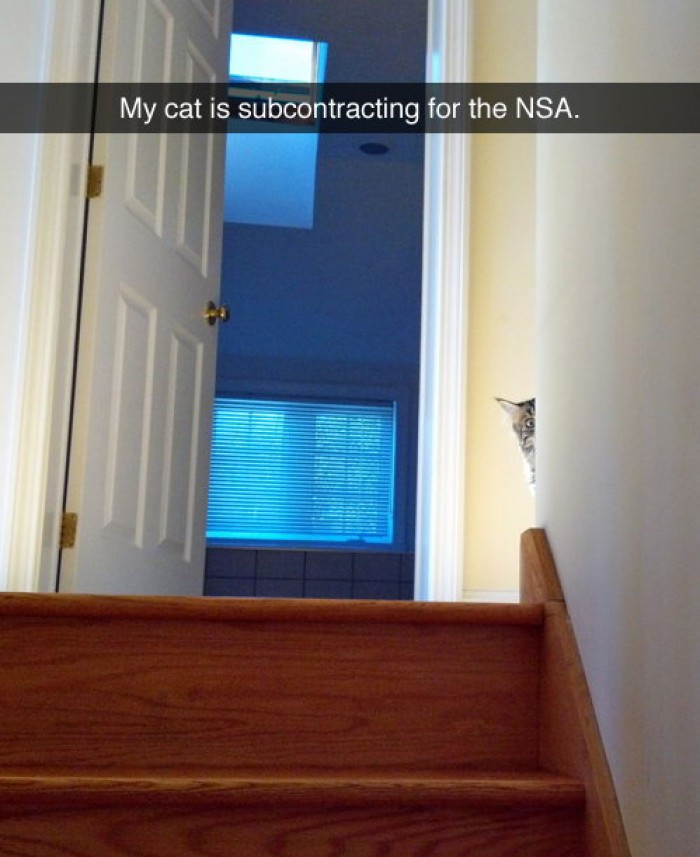 My cat is subcontracting for the NSA.